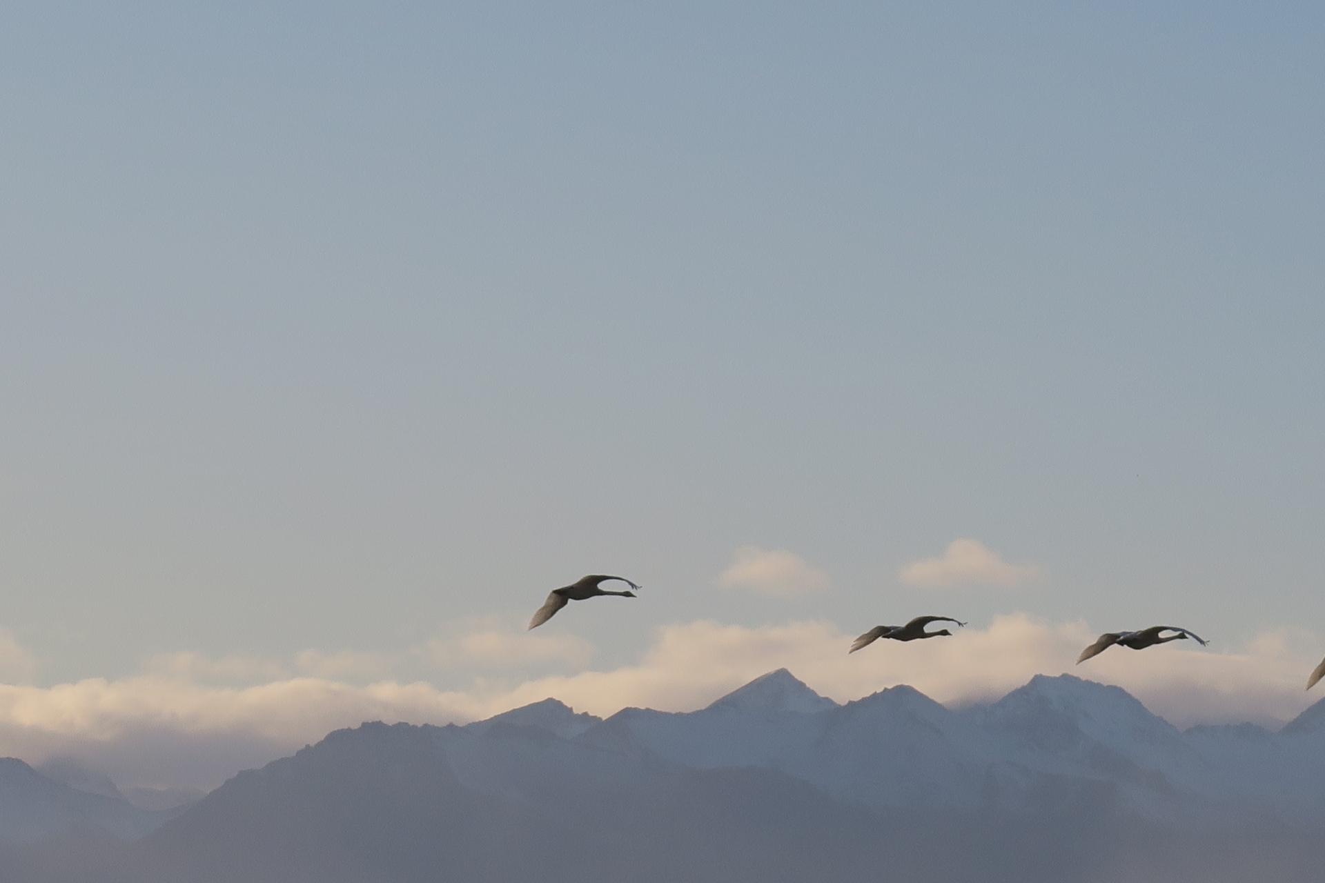 Fuglar á flugi