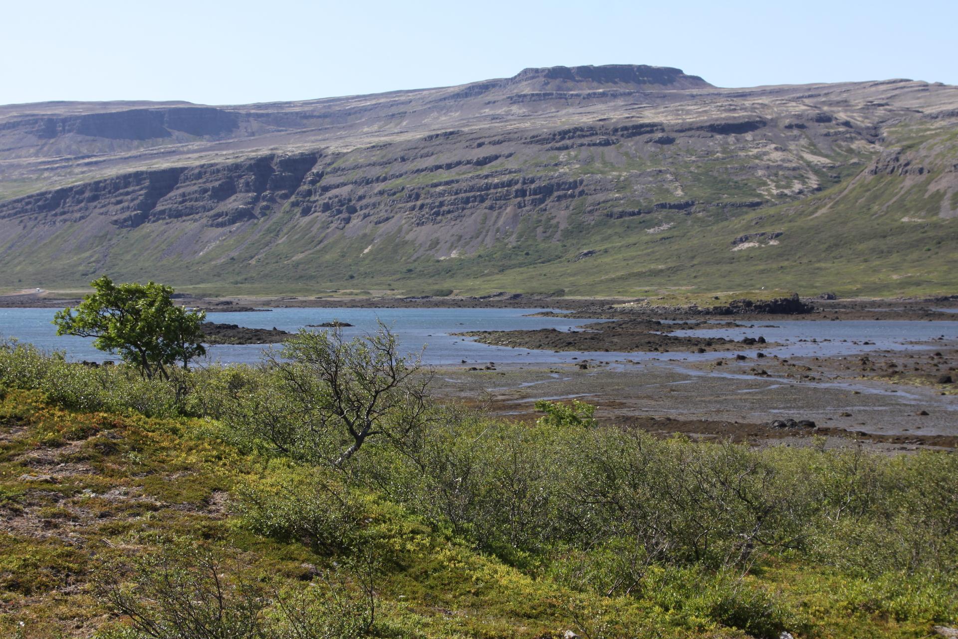 Æðarungar eru taldir ár hvert við Breiðafjörð síðan 2007. Hér sést talningastaðurinn við Kerlingafjörð en þar er lítið æðarvarp með nokkrum tugum varpkollna.