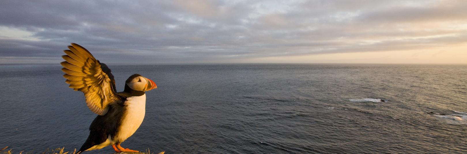 Grein um lundarannsóknir HÍmeð þeim bestu í tímaritinu JEB - á vefsíðu Háskóla Íslands