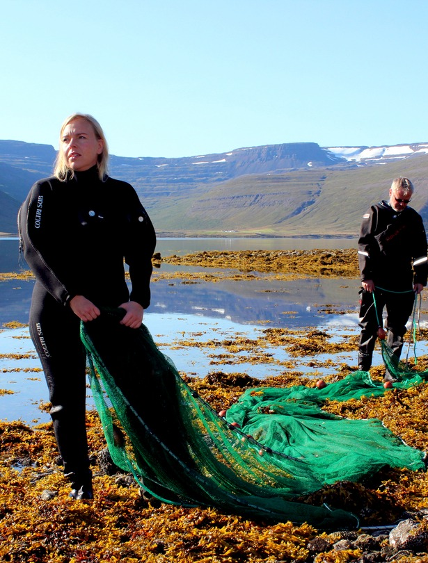 Þorskseiðarannsóknir í Álftafirði